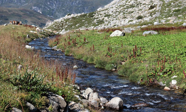 горная река фото (10)