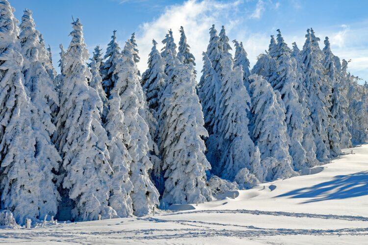 красивые фото леса (1)