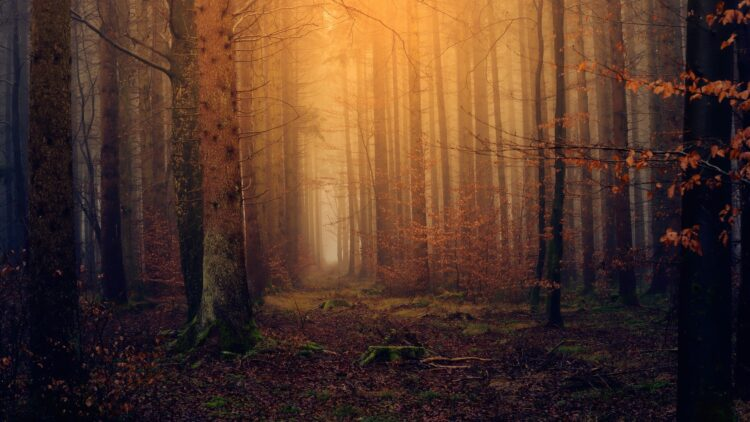 красивые фото леса (10)