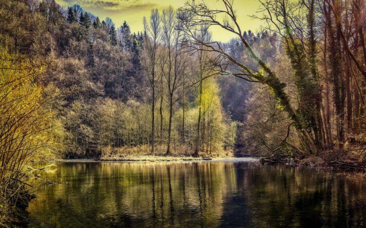 красивые фото леса (11)