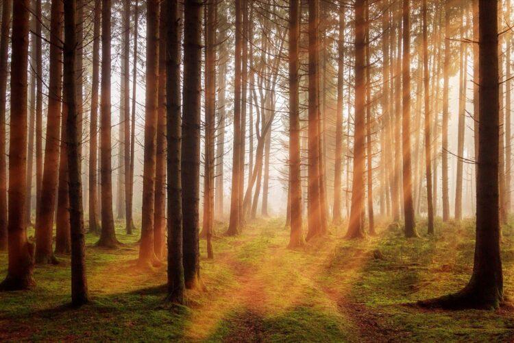 красивые фото леса (12)