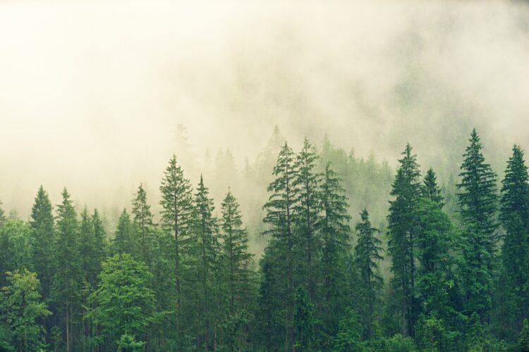 красивые фото леса (13)