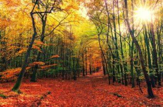 красивые фото леса (14)