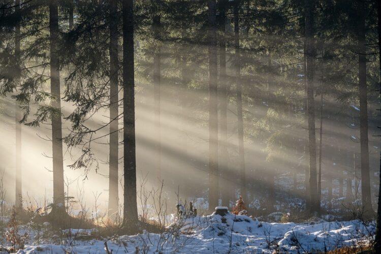красивые фото леса (15)