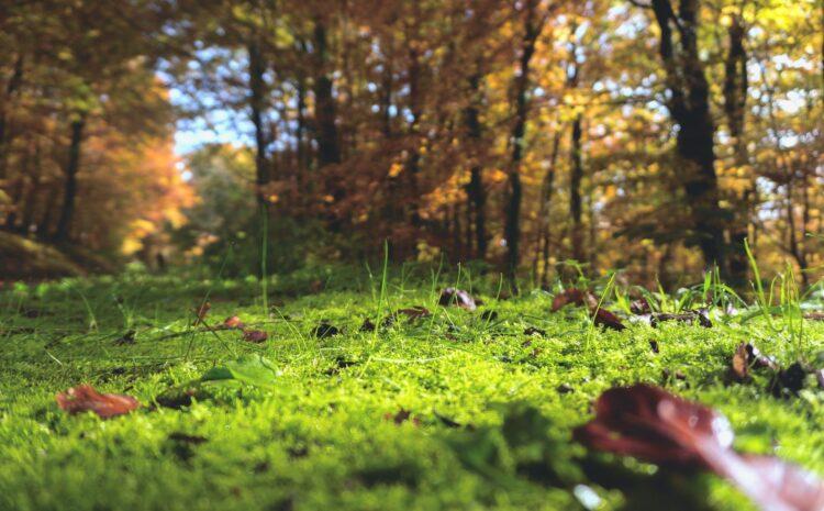 красивые фото леса (17)