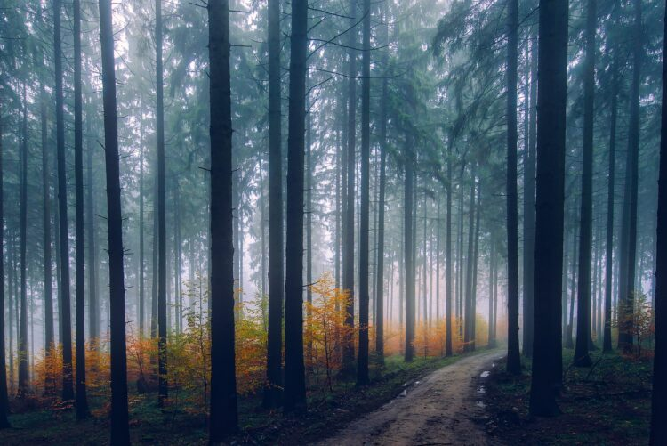 красивые фото леса (18)