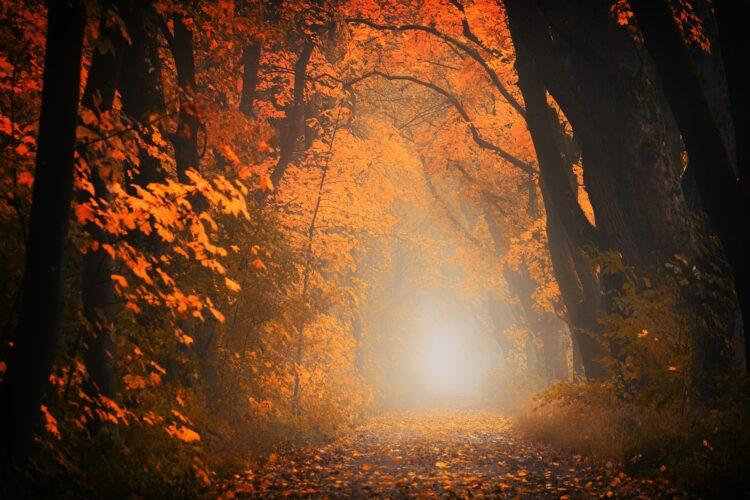 красивые фото леса (19)