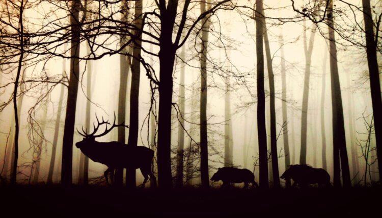 красивые фото леса (2)