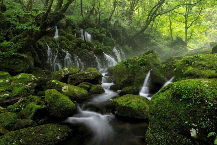 красивые фото леса (24)
