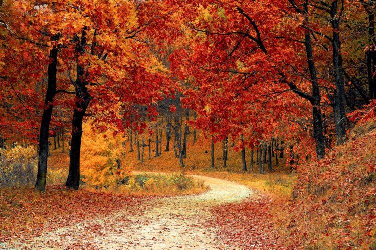 красивые фото леса (25)
