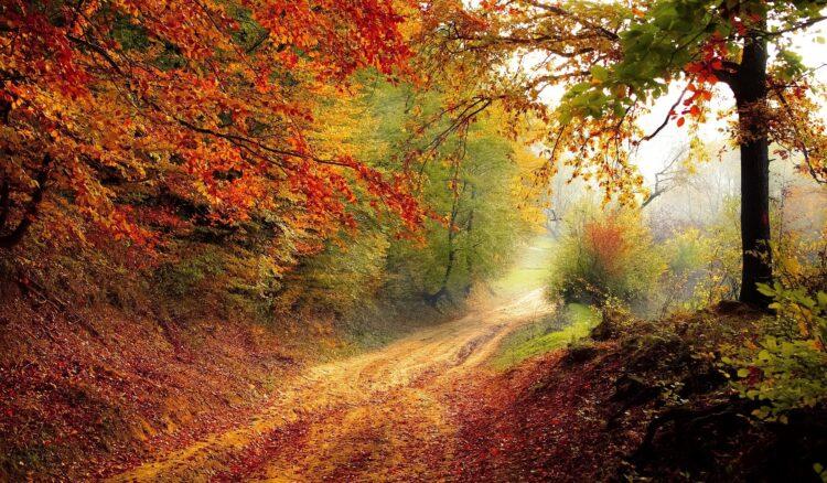 красивые фото леса (26)