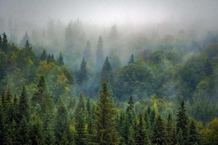 красивые фото леса (29)