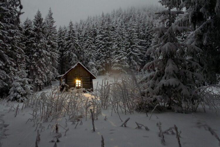 красивые фото леса (3)