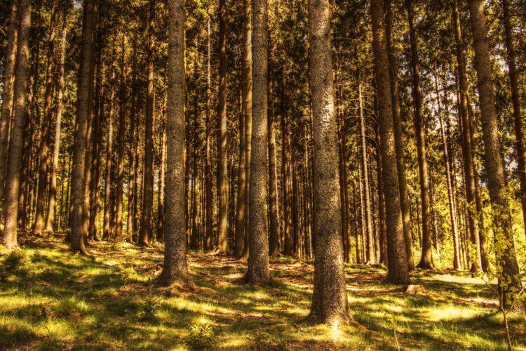 красивые фото леса (30)