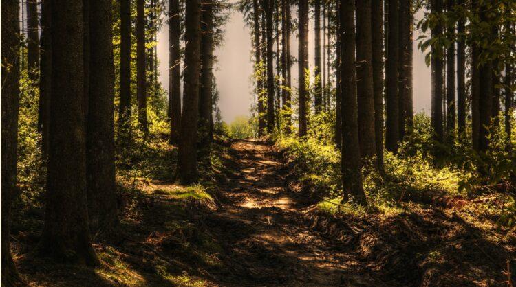 красивые фото леса (31)
