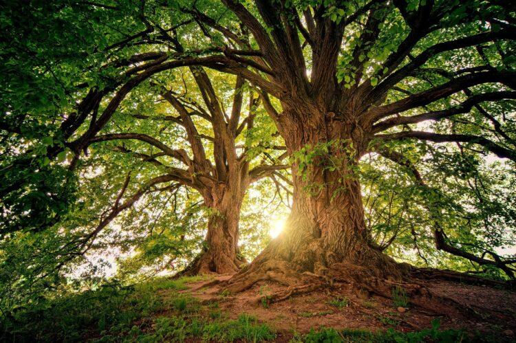 красивые фото леса (32)