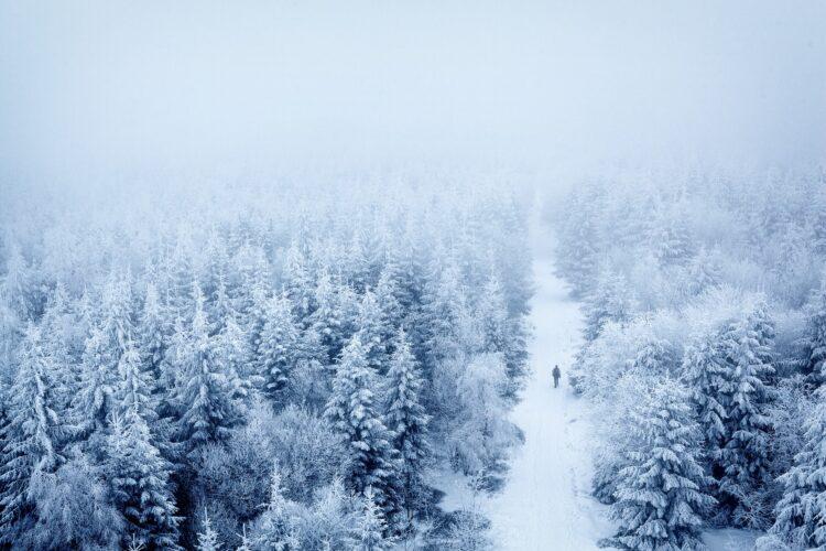 красивые фото леса (33)