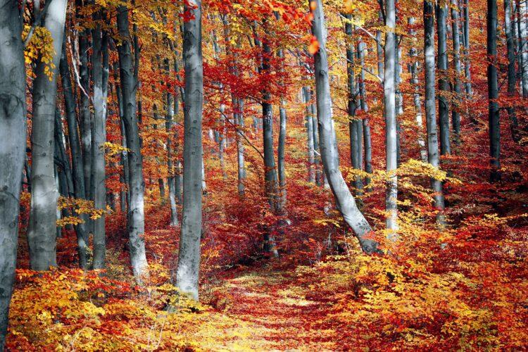 красивые фото леса (4)