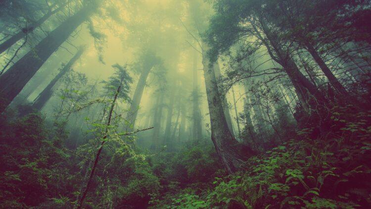 красивые фото леса (5)
