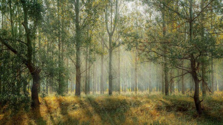 красивые фото леса (6)
