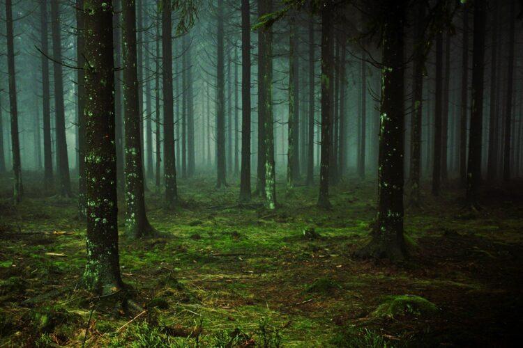 красивые фото леса (7)