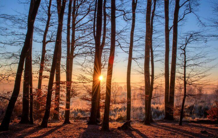 красивые фото леса (8)